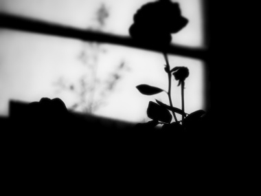 I was left there . . . in the company of the roses.
